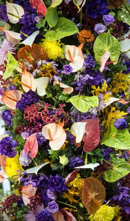 grower: Anthurium Grower Stock Photo