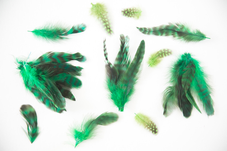 white necked: Beautiful abstract background consisting of lime green chartreuse dyed lady amherst pheasant feathers
