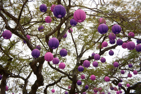 ornamental garden: paper Lanterns on tree branch