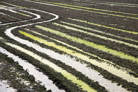 plough land: Spring scene