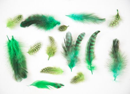 necked woman: Beautiful abstract background consisting of lime green chartreuse dyed lady amherst pheasant feathers