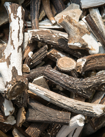traitor: Antler dried for medicine Stock Photo