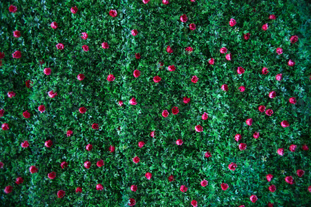 penthouse: fake grass and flower wall Stock Photo
