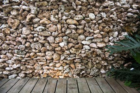 damselfish: Reef wall