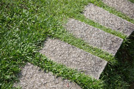 flower garden path: scene of herb garden