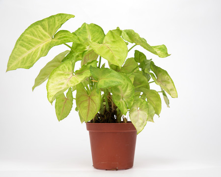 potted: Tropical potted