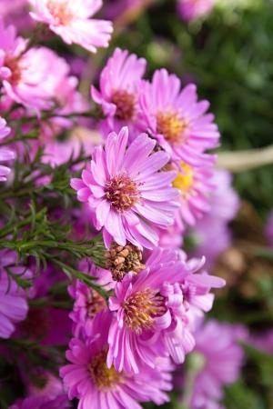 lilia: flores Foto de archivo