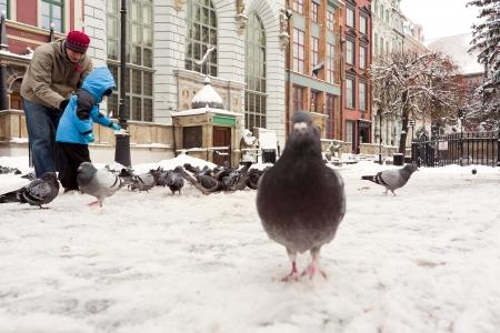 Gdansk, Poland - 13 January, 2013 - Feeding pigeons in the centre of Gdansk.
