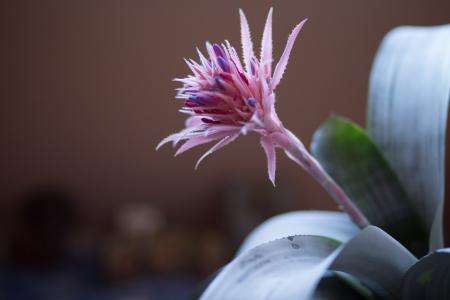 aechmea: Aechmea flower in action. Nice view on blossom.