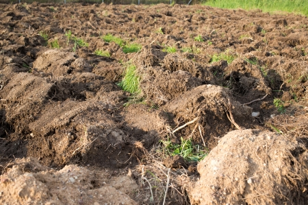 plough land: Soil in the ploughed field after harvest
