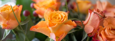 A multicolor rose is a perennial flower of the genus Rosa, within the family Rosaceae photo