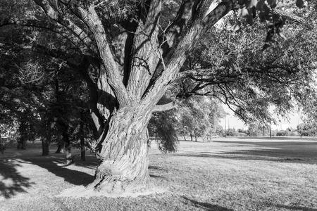 lublin: Tree in park, Lublin, Poland.