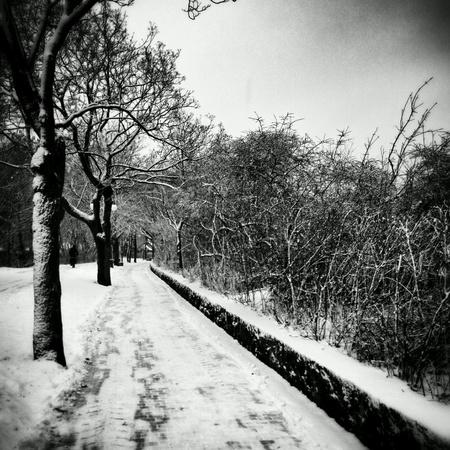 art: Winter in park, Sopot, Poland. Stock Photo