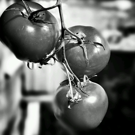 artistic: Red tomato. Artistic look in black and white.