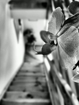 art: Orchid flowers.