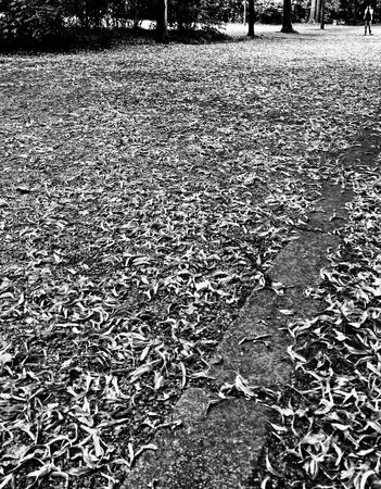 white: Sightseeing Berlin, Germany.