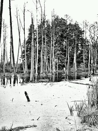 swamp: The swamp. Stock Photo