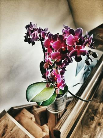 orchidaceae: Orchidaceae flower, purple orchids, the Orchid family.