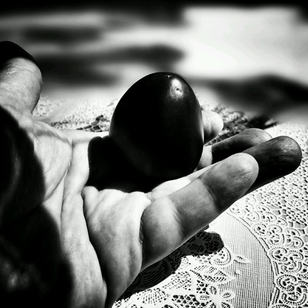 black white red: Red tomatoes in black and white. Still life collection.