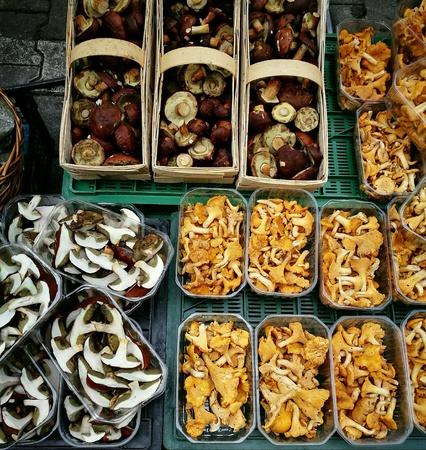 mushrooming: Mushrooming. Boleuts and chanterelles. Stock Photo
