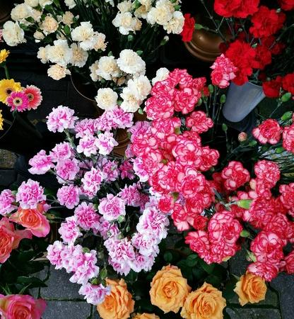 clove plant: Big family flowers.  Rose, dandelion and cloves.