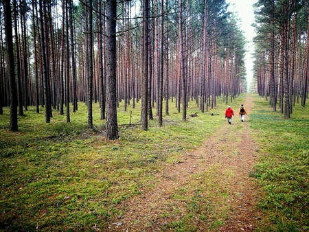 Tuchola Pinewoods. Deep forest land in Northern Poland.