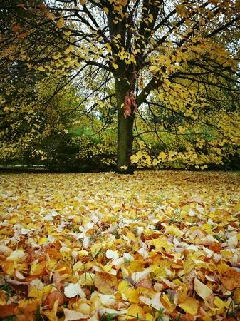 Autumn colours. Stock Photo