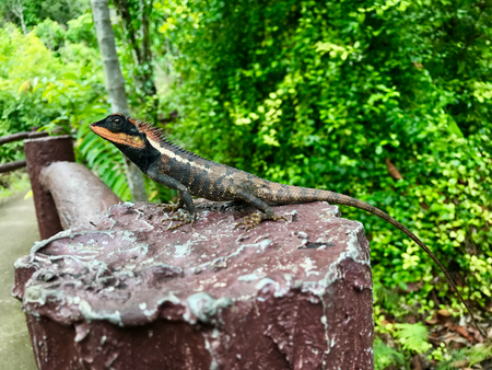 The lizard is lay down on wood in landscape
