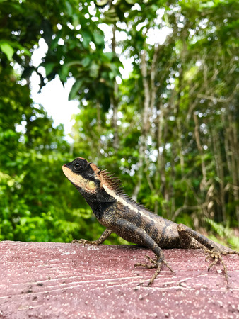 The lizard is on the wood in portrait Stock Photo