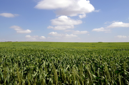 israel agriculture: The field Stock Photo