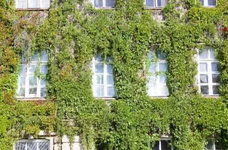 Green vegetable facade of old house with windows