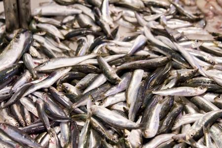 Fresh sardines at market