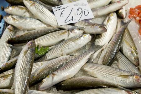Fresh sea bass at market stall outdoor Stock Photo