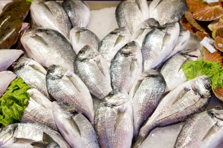 Fresh sea bass at market stall outdoor Foto de archivo