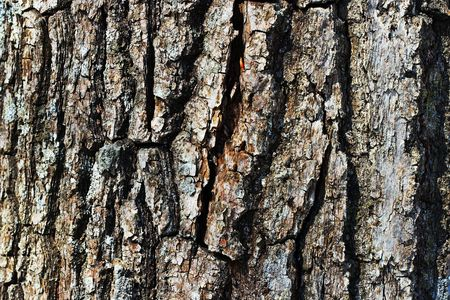 extreme close-up of the grain bark of wild tree photo