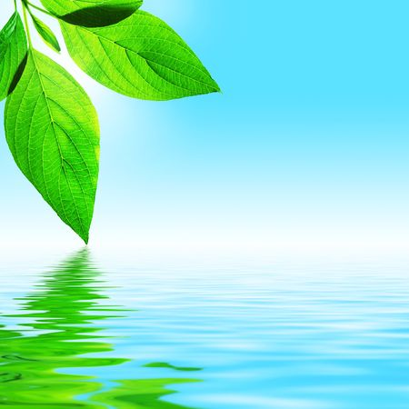 fresh leaf, blue sky and shine water surface (blank space for text)