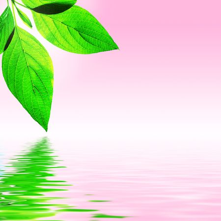 fresh leaf, pink sky and shine water surface (blank space for text) Stock Photo