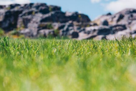 Closeup of grass on a background of rocky terrain DOF