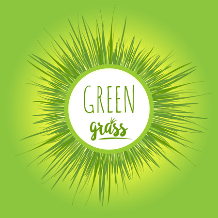 greeen: Realistic grass lawn isolated on greeen. Floral eco nature background. Organic food, healthy food. Web vector illustration.
