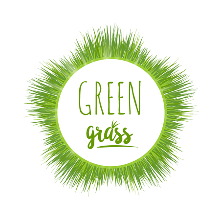 garden lawn: Realistic green grass lawn isolated on white. Floral eco nature background. Organic food, healthy food. Web vector illustration. Illustration