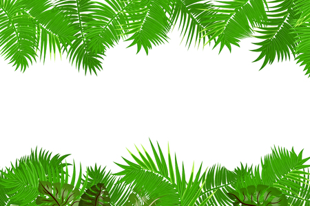 Web summer jungle frame banner. Green palm leaves template isolated white background. Vector abstract illustration. Realistic picture summer tropical Paradise mock up. 矢量图像