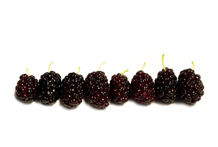 Mulberry fruit and Mulberry leaves, Mulberry isolated on white background. Standard-Bild - 104506692
