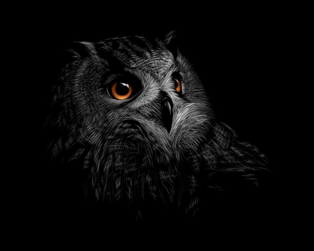 Portrait of a long-eared owl on a black background. Vector illustration