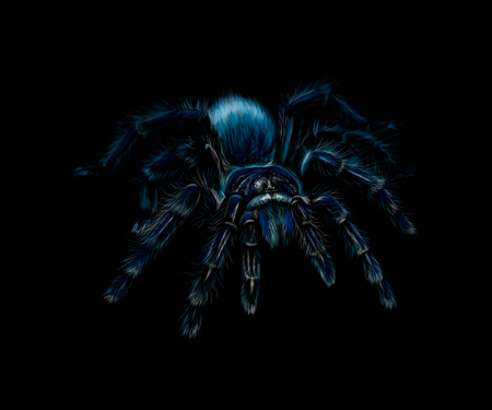 Portrait of a spider Tarantula Grammostola on a black background. Vector illustration Banco de Imagens - 124169918