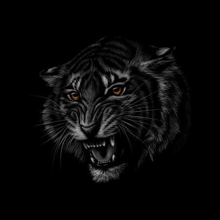 Portrait d'une tête de tigre sur fond noir. Illustration vectorielle Vecteurs