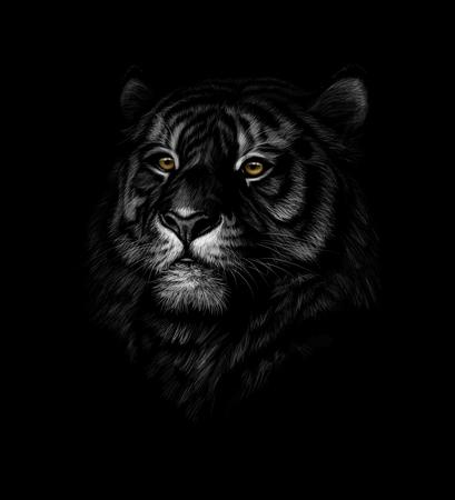 Retrato de una cabeza de tigre sobre un fondo negro. Ilustración vectorial