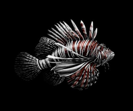 Tropical fish. Portrait of a lionfish on a black background. Vector illustration Ilustração