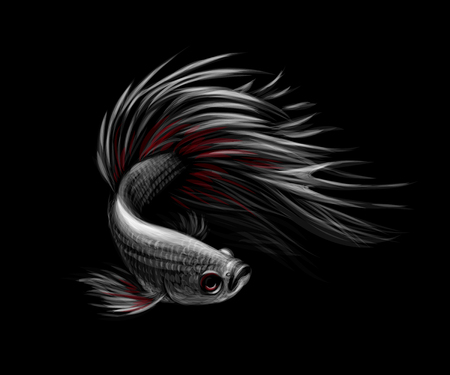 Colourful Betta fish,Siamese fighting fish in movement isolated on black background. Vector illustration Banco de Imagens - 124169925
