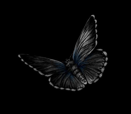 Farfalla su sfondo nero, disegnata a mano