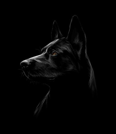 Retrato de un perro pastor negro sobre un fondo negro